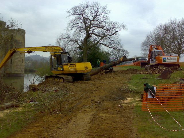 - Bodiam Tree Clearing